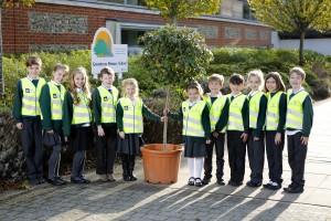 BSC_GreentreesPrim_Salisbury_Tree_MR (1)